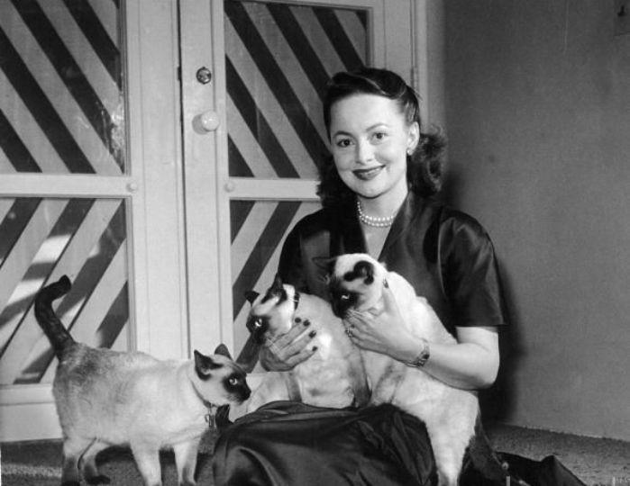 Olivia de Havilland With Cats