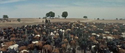 The Tall Men (1955) 248