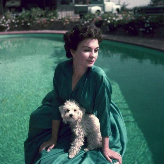 Jean Simmons (The Actress)