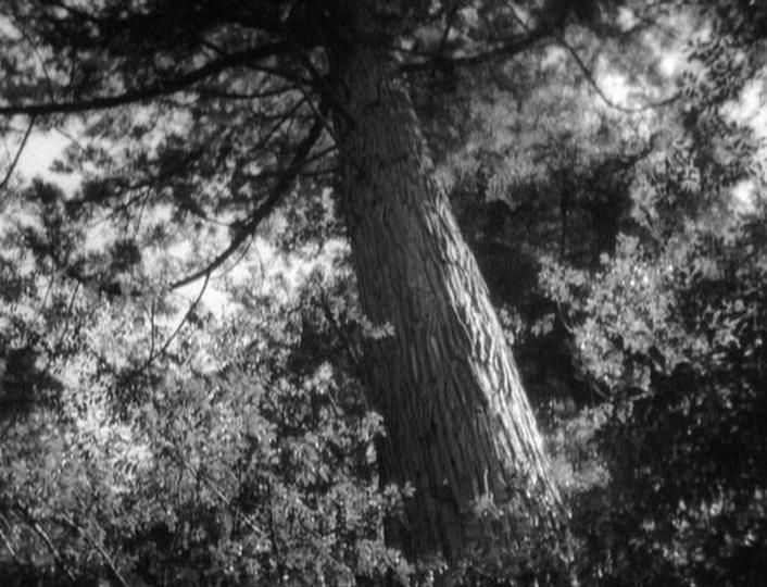 Rashômon (1950) 02