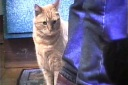 Burroughs & gatos 10