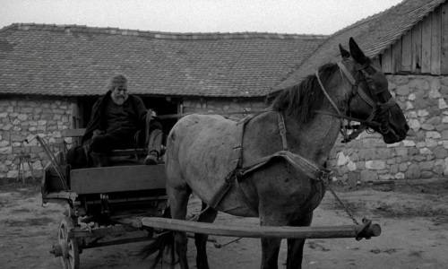 the.turin.horse 149